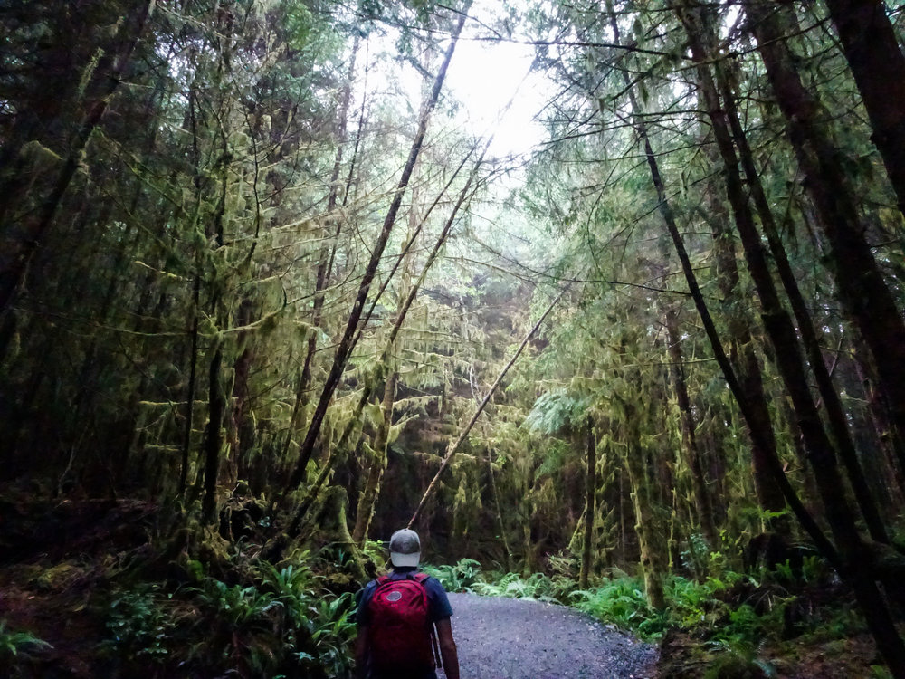 Juan De Fuca Trail Jungle
