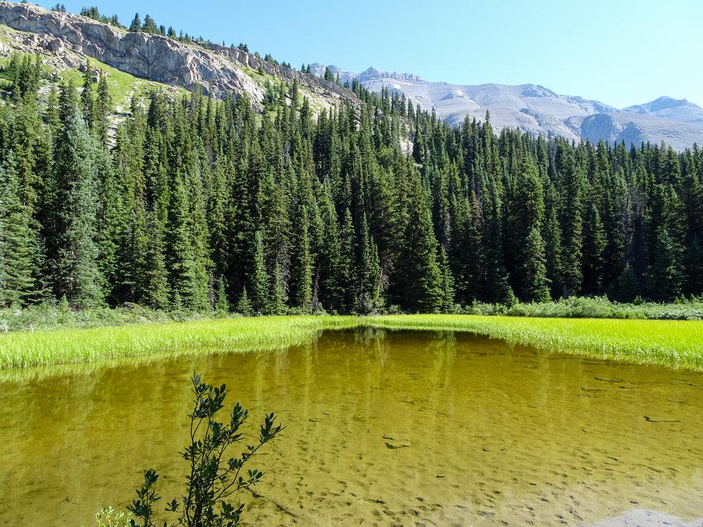 Wilcox Pass Lake