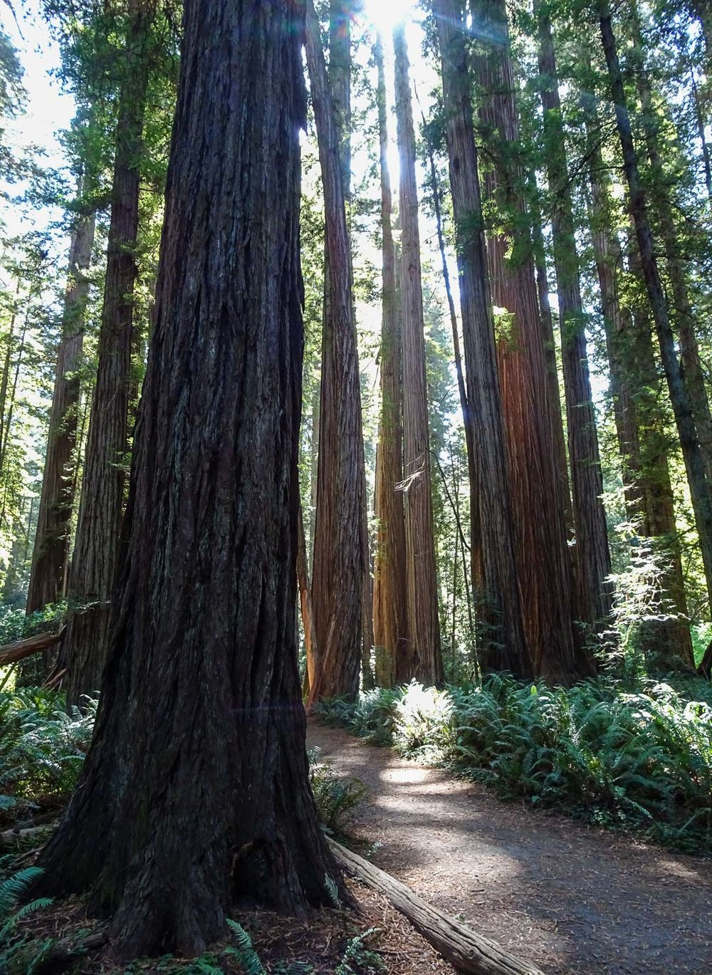 Redwoods State Park California