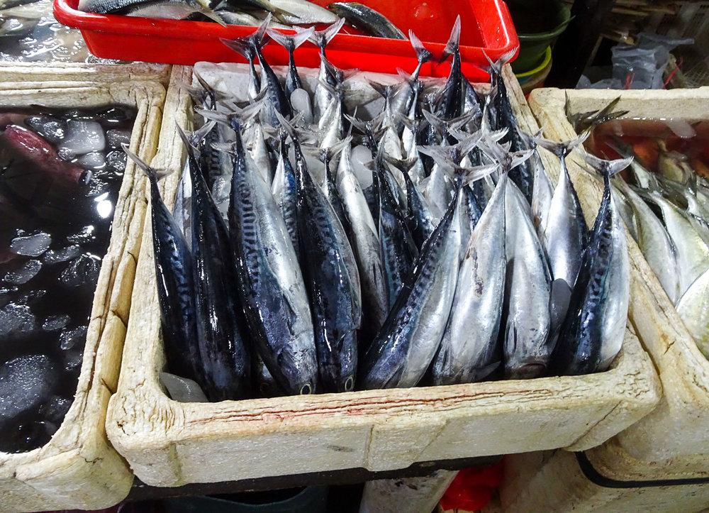 More Tuna?