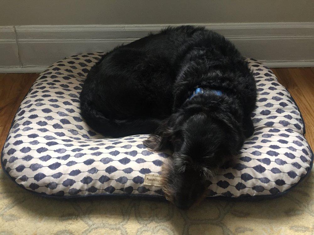 Apollo, the Wonder Dog!