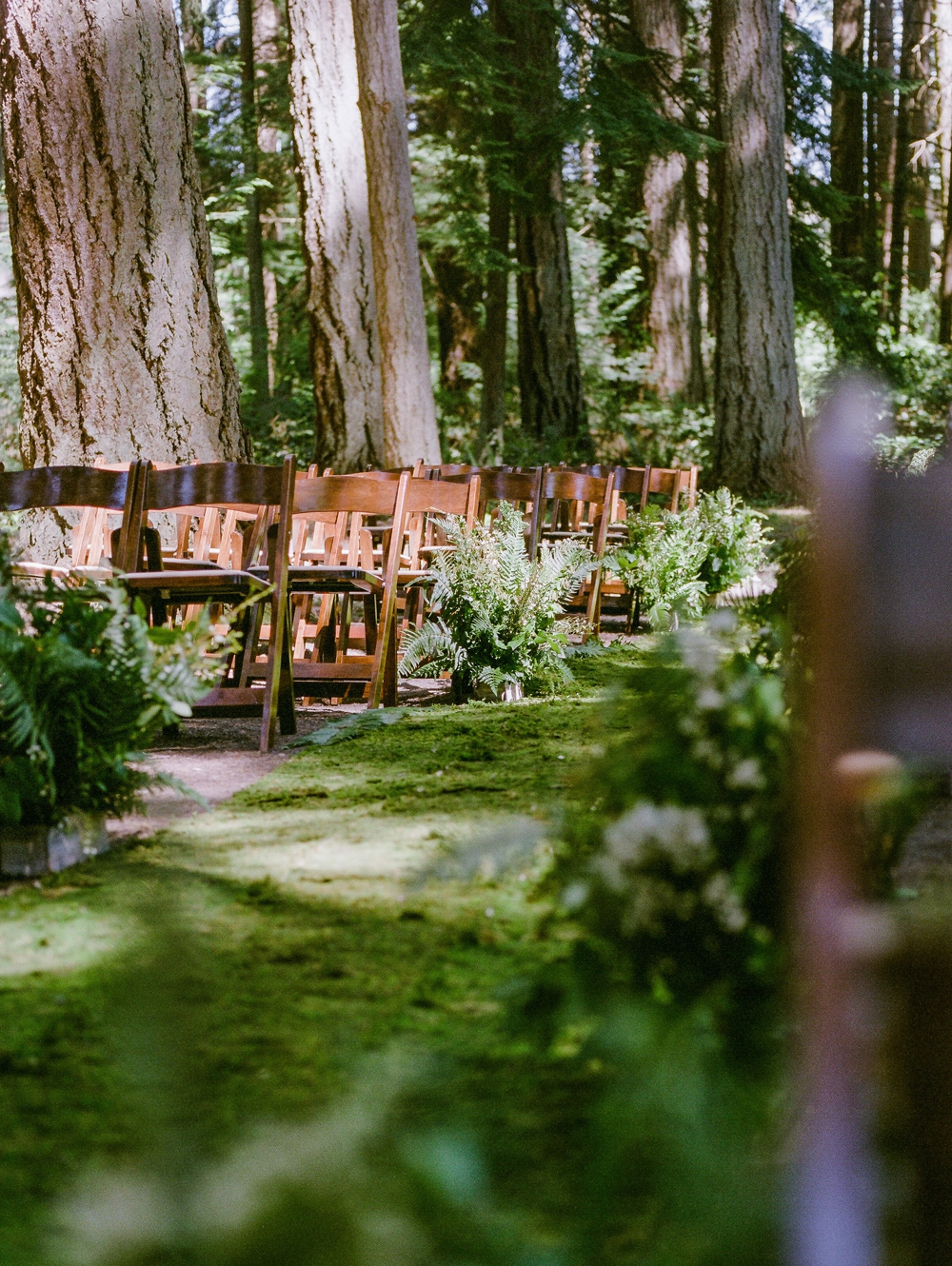 wedding aisle in woods with fern accents and moss aisle