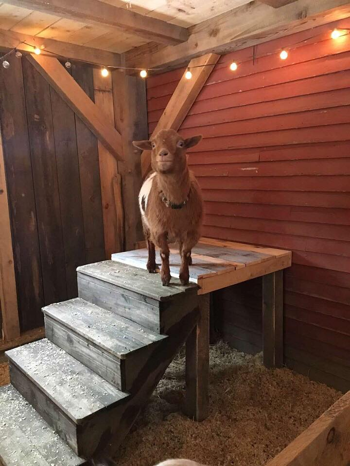 Olaf says thank you to the young women of Soul Models who built this platform with reclaimed materials, teamwork and a little bit of elbow grease.