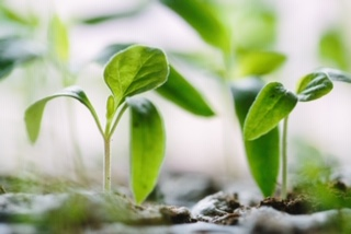 Grow Teams