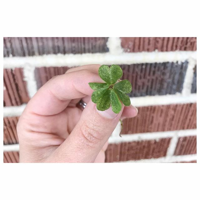Happy Monday! Hope everyone had a fun and safe St. Patrick's Day weekend! I had a super relaxing time with friends and family and even closed out the weekend by finding one of these little guys! 🍀 Random fact about me: I'm actually really good at finding four-leaf clovers! (Must be the Irish blood. 😉🇮🇪) . . . . #resplendentliving #resplendentlivingstyling #stylist #savannahstylist #stpatricksday #fourleafclover #luckoftheirish