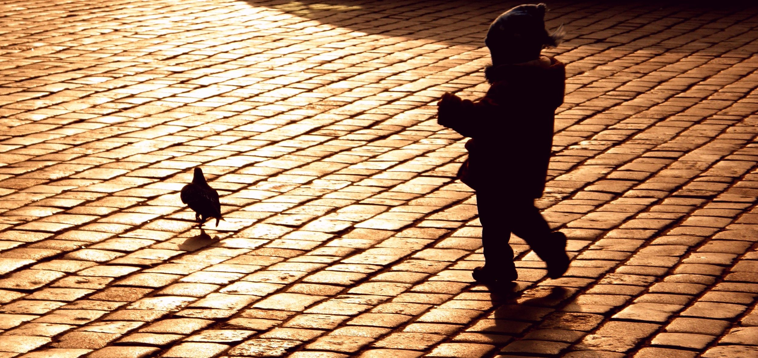 Child walking in sunset, following a bird