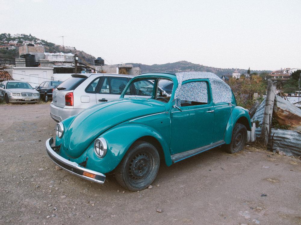 Taxco Beetles-12.jpg