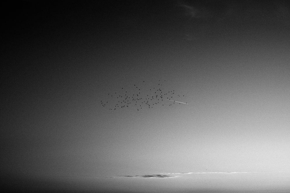 BIRDS CHASING A JET TRAIL