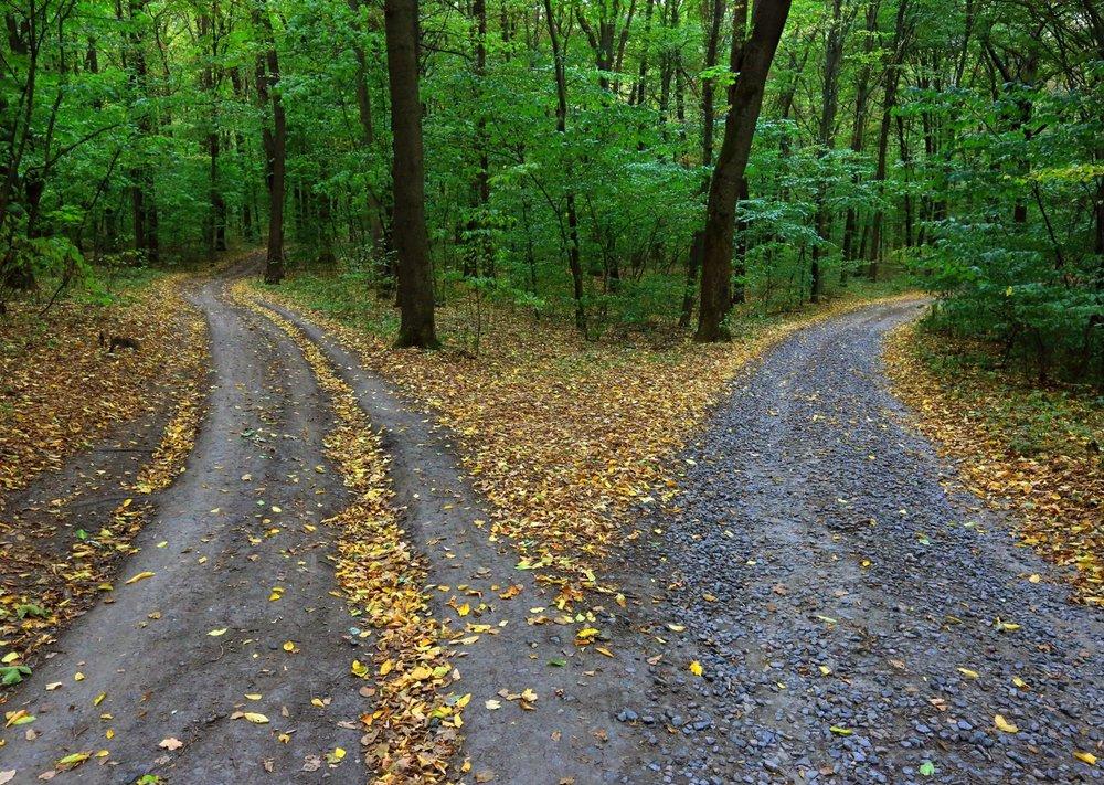 W Path.jpg
