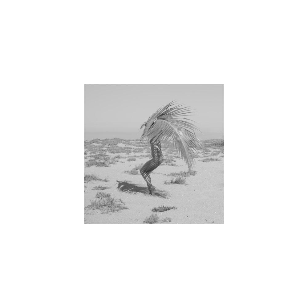 Sombra de palma.jpg