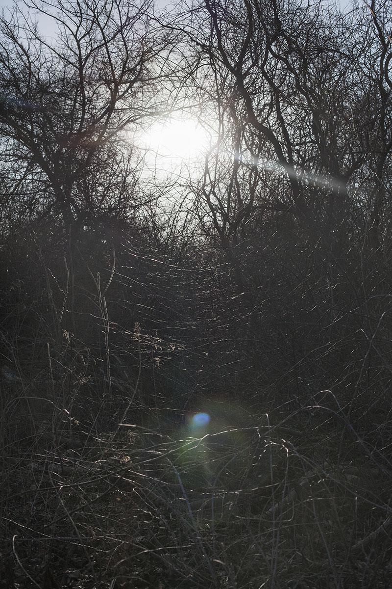 LensFlare.jpg