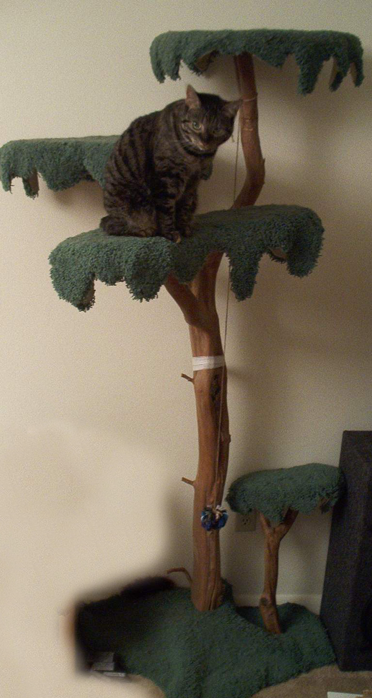 HomemadeCatTree.jpg