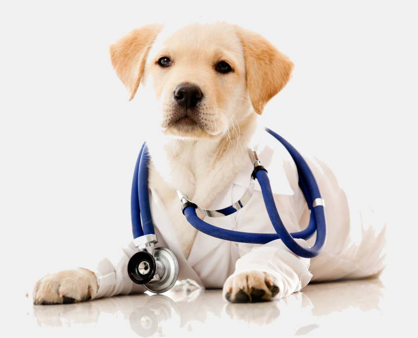 dog doctor.jpeg