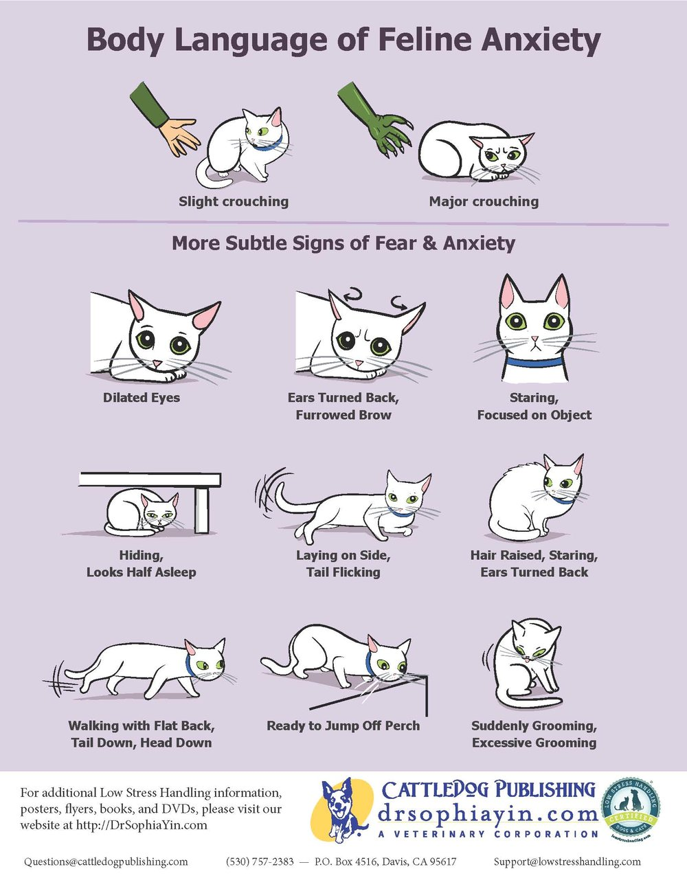 Body-Language-of-Feline-Anxiety-Poster.jpg