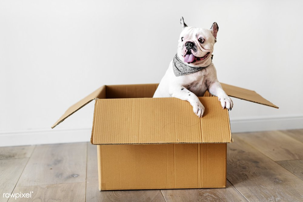 Moving Tips for Pets - Don't forget the toys!