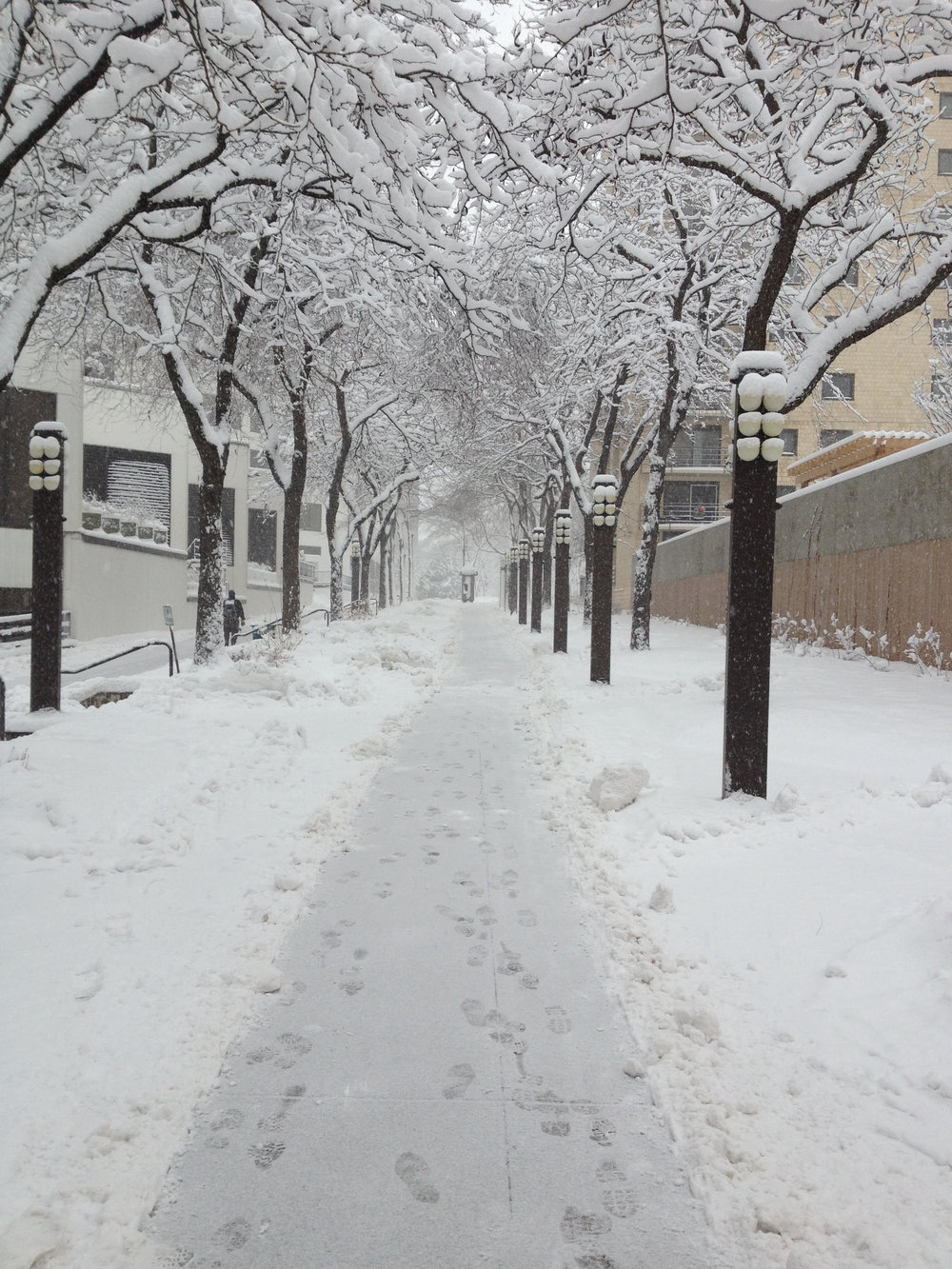 Snowy Greenway.jpg