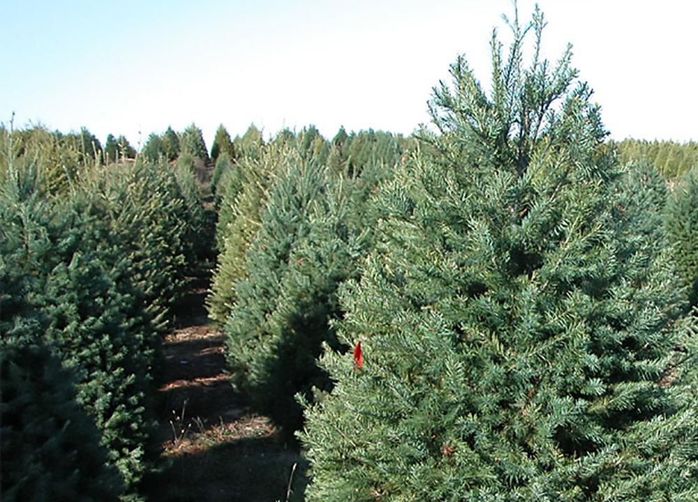 trees-full-1500.jpg