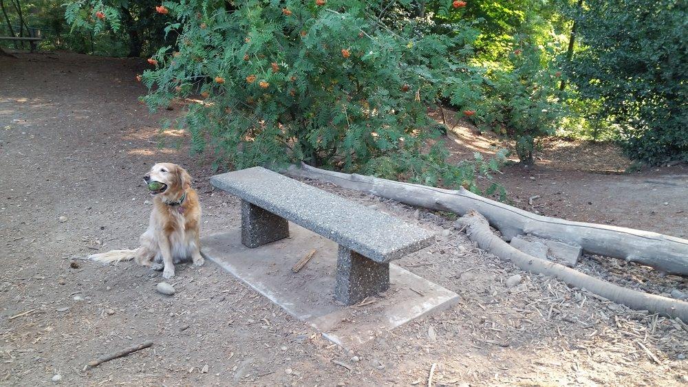Dog Park bench.jpg