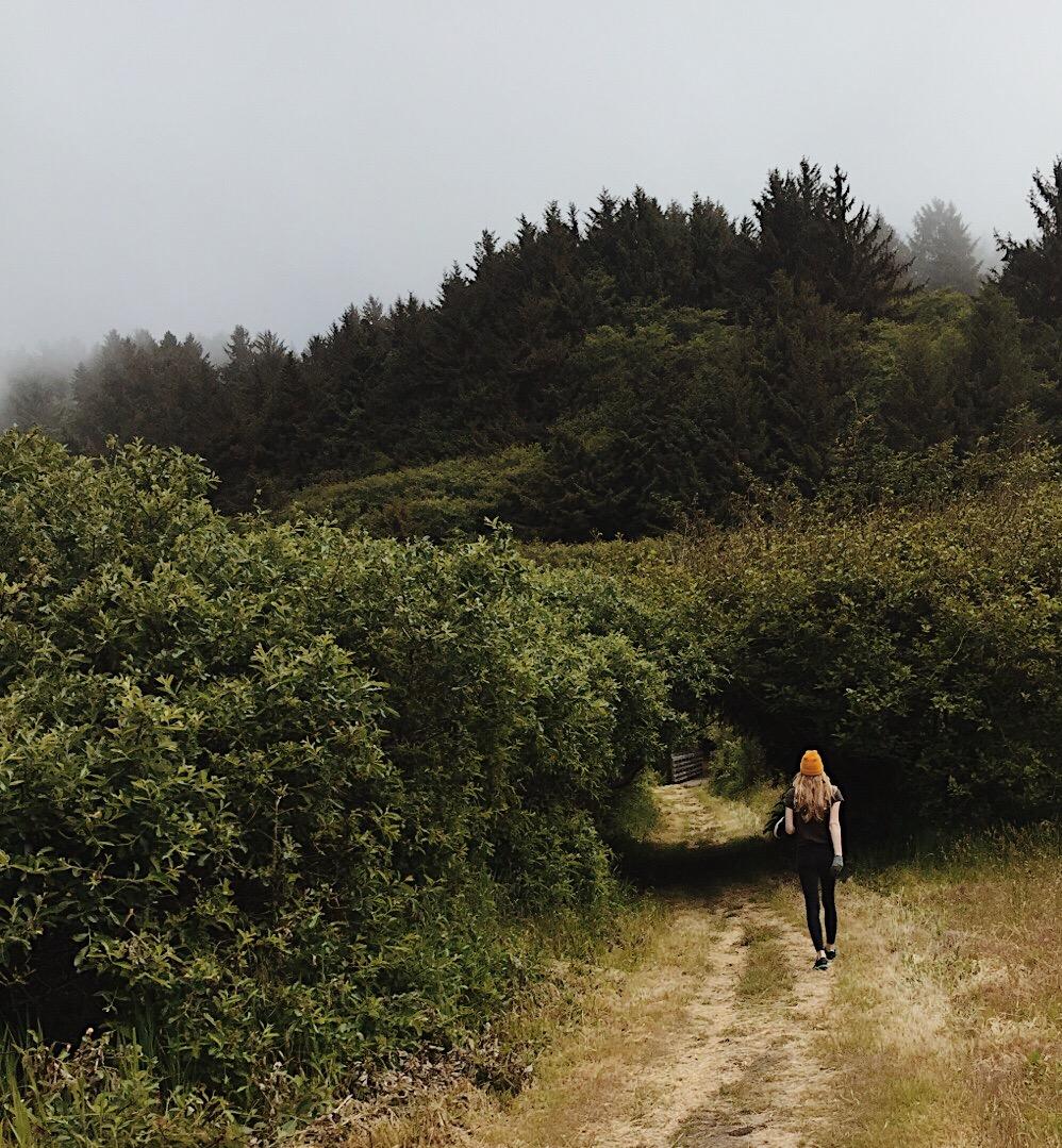 redwoods-national-park.jpg