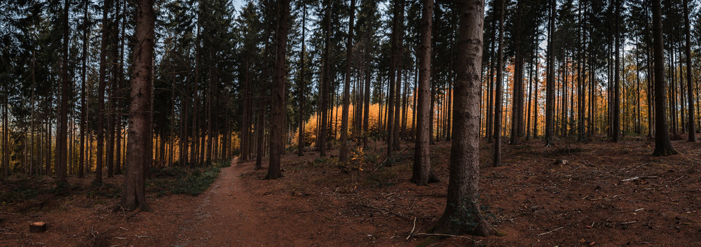 Panorama shot of the forest, epic colors peeping through in the back.