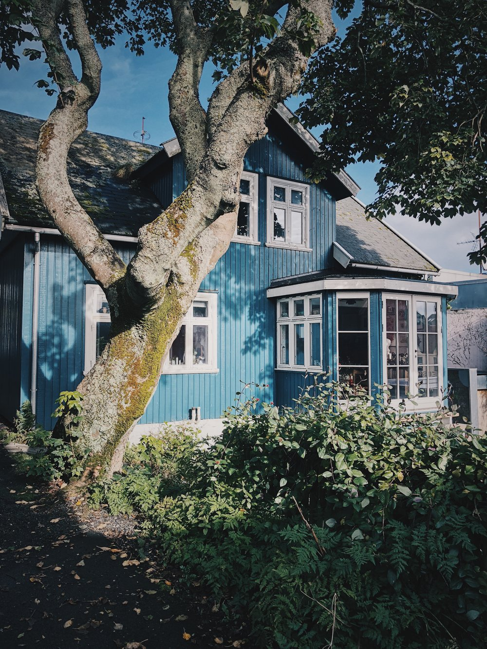 Typical and beautiful Faroese houses.
