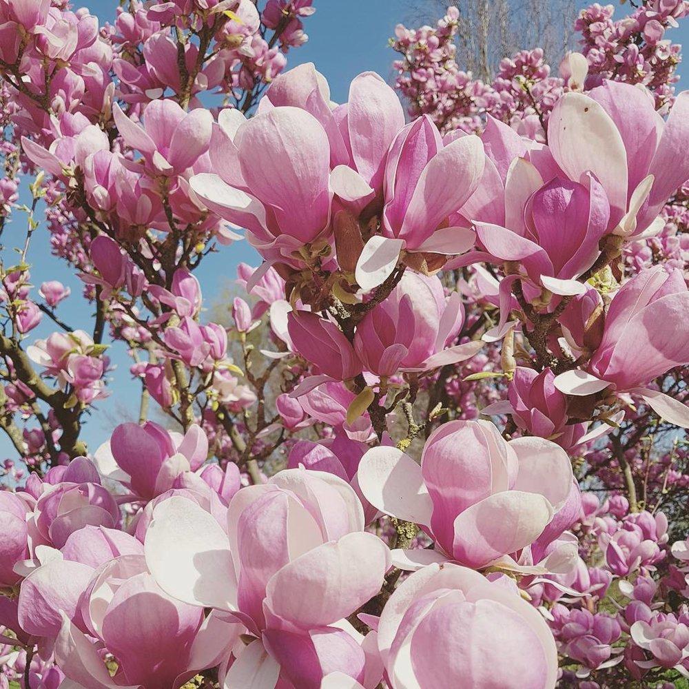 pink magnolia inspiration