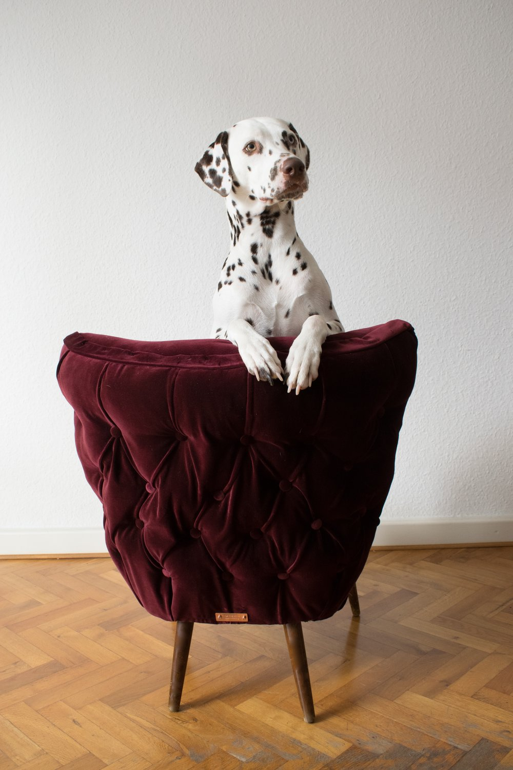 Red burgundy velvet chair