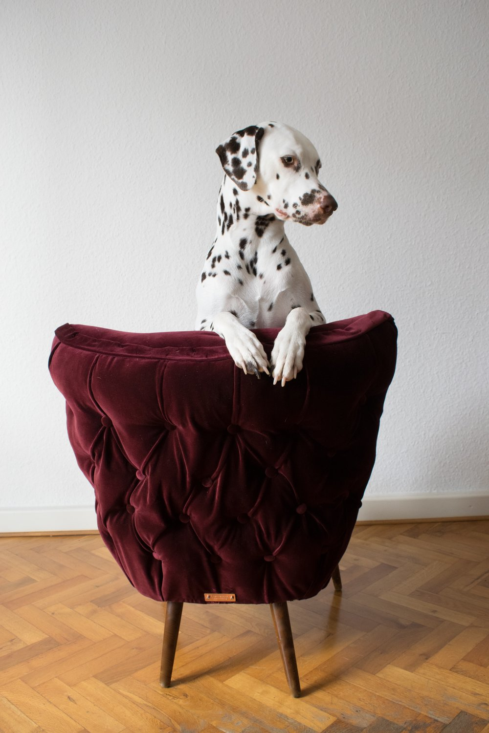 Burgundy velvet cocktail chair