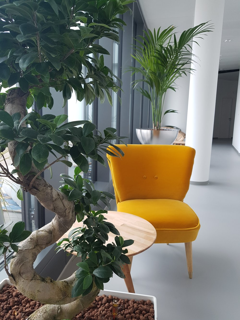 Yellow velvet chairs trivago campus
