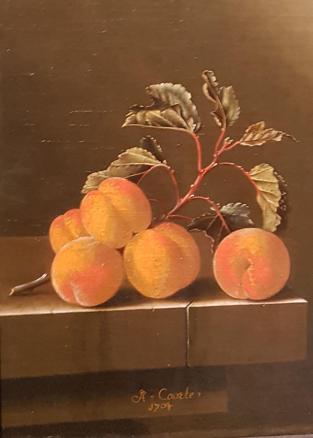 art holidays 5 apricots.jpg