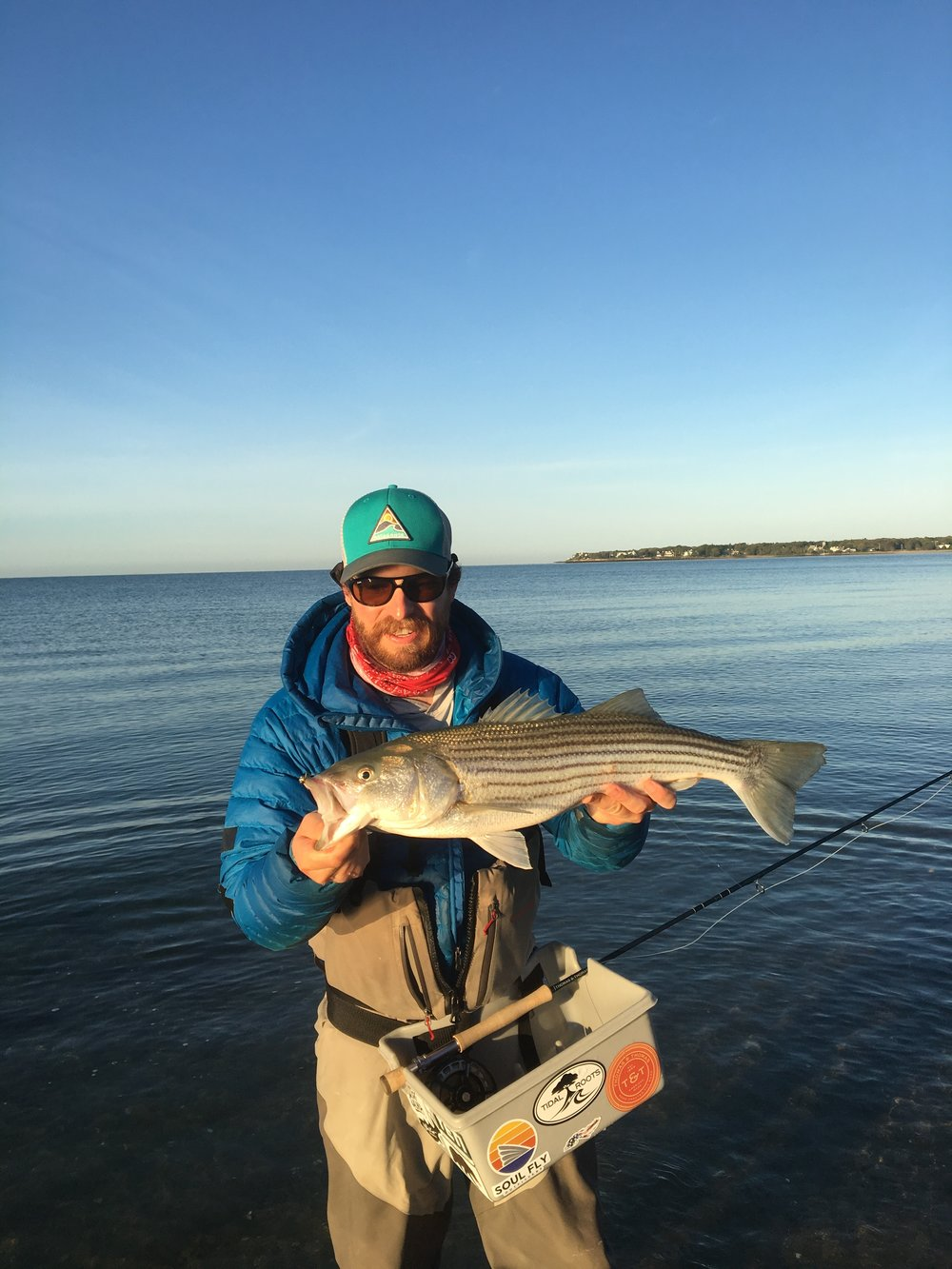 A striped bass sight fished from the beach.