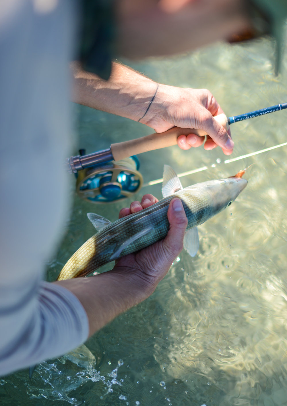 Bonefish all day, weather was perfect with slicked out conditions and full sun for 6 days.