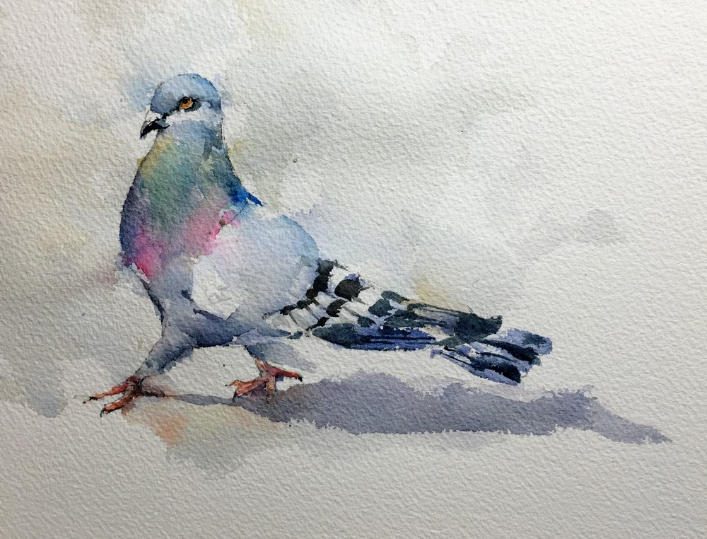 pigeon_watercolor.JPG