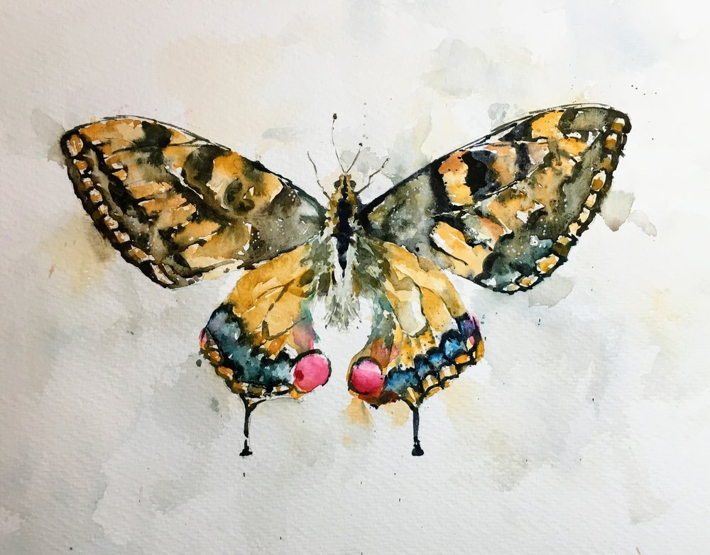 "Swallowtail Butterfly.   Watercolor by Michele Clamp.  11""x14"" on 200lb Bockingford rough."