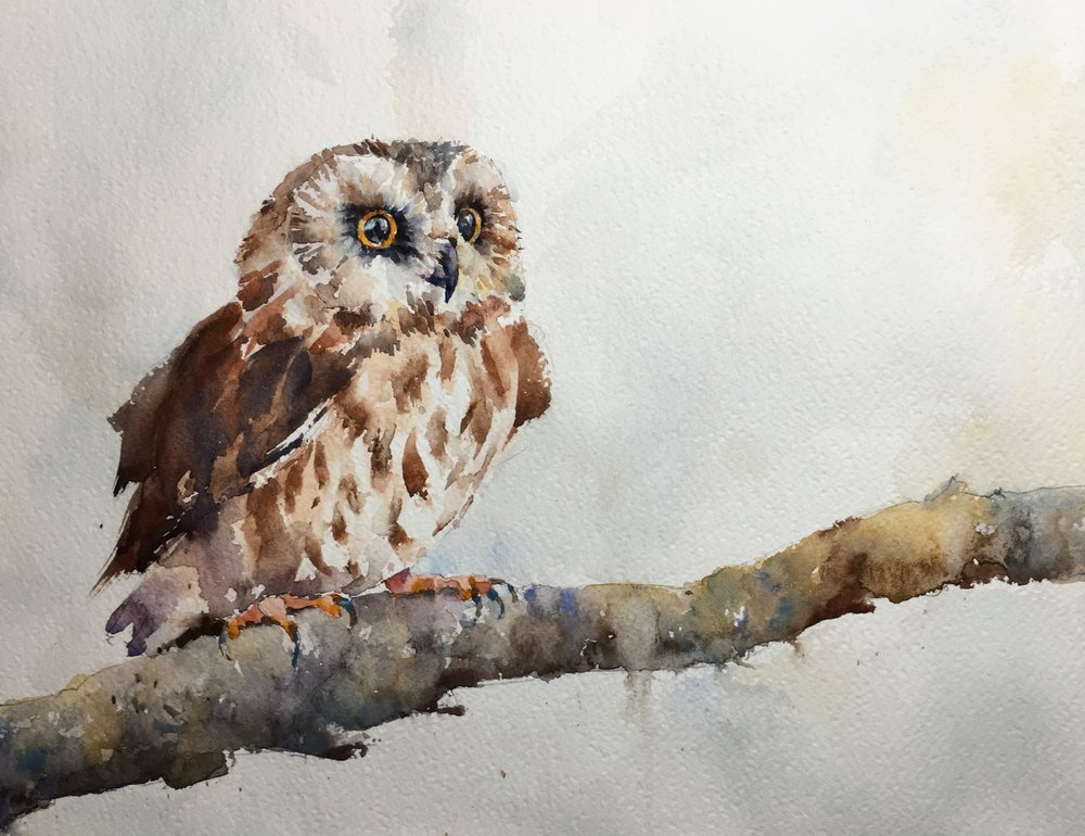 saw-whet-owl-watercolor.JPG
