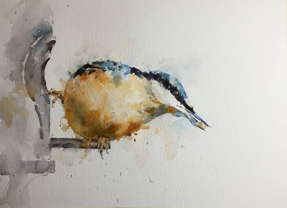 "Nuthatch.  Michele Clamp.  Watercolor 11""x14"""