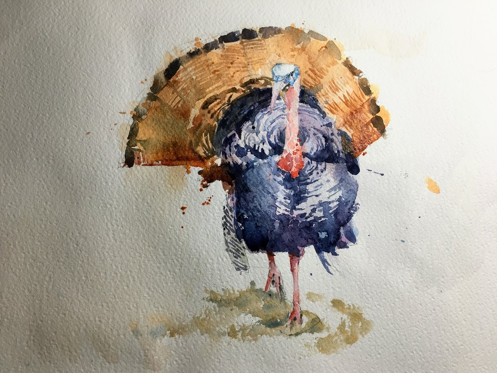"Turkey.  Michele Clamp.  Watercolor 11""x14"""
