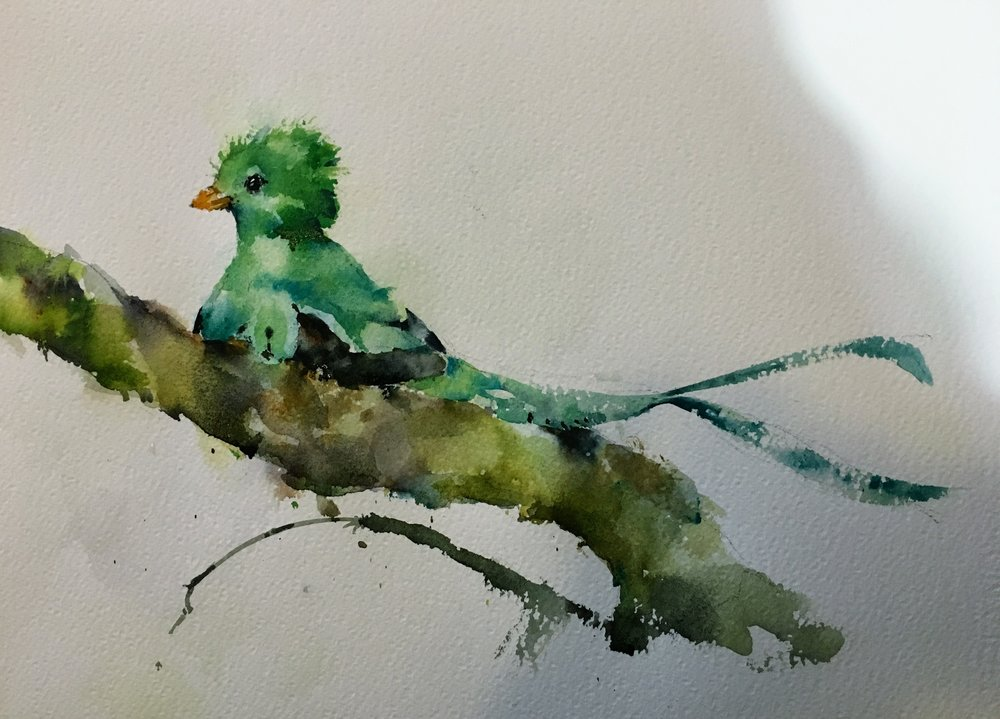 Quetzal watercolor.  Michele Clamp.  Photo reference from https://www.flickr.com/people/31267353@N03/