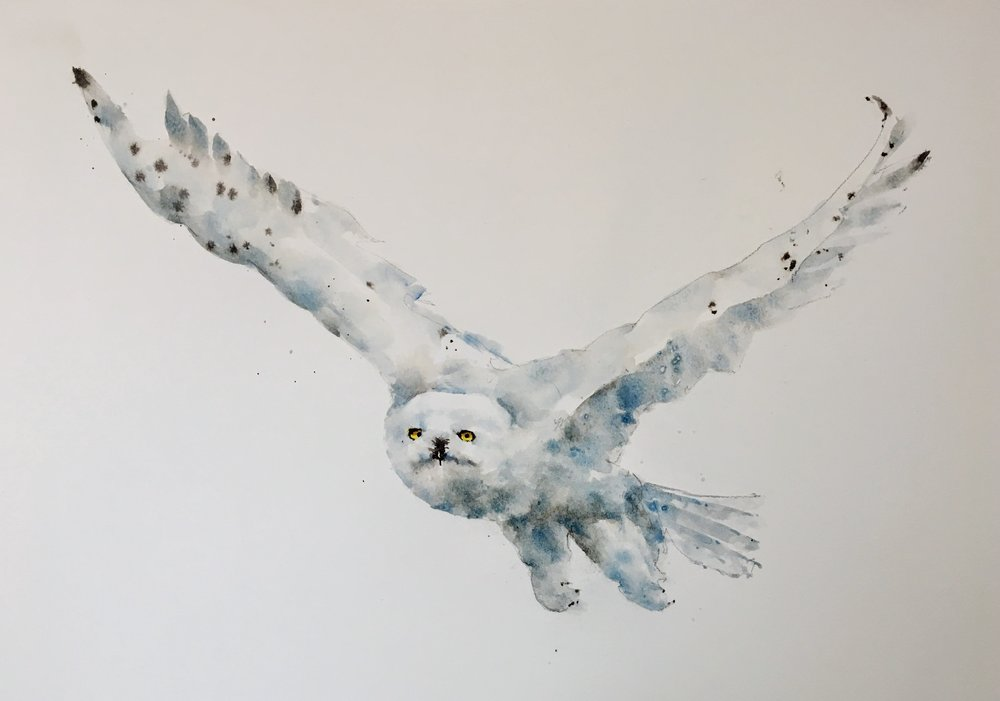 snowy_owl_watercolor_painting