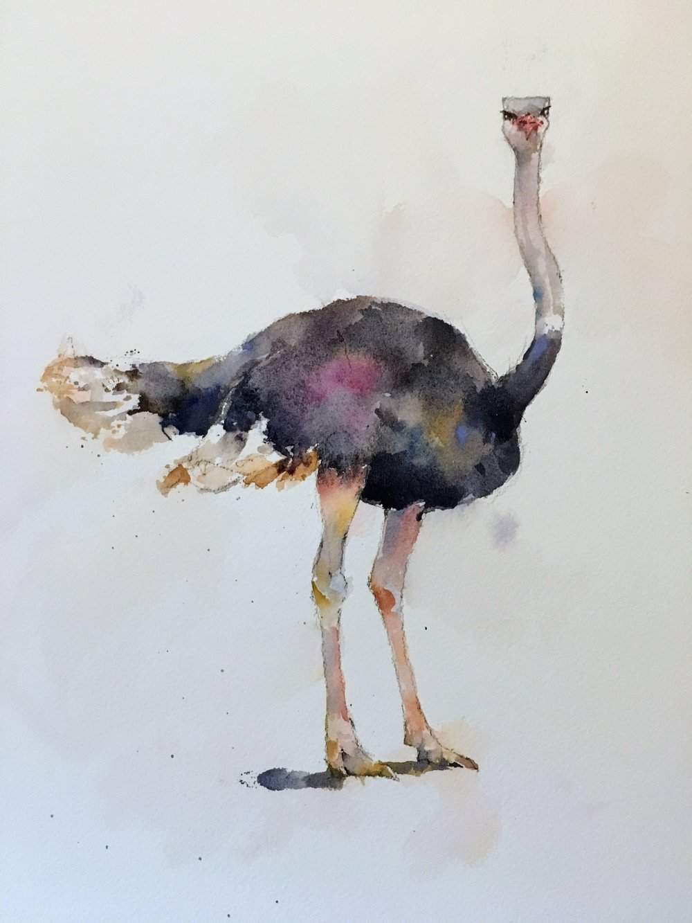 "Ostrich.  Michele Clamp.  Watercolor 14""x11"""
