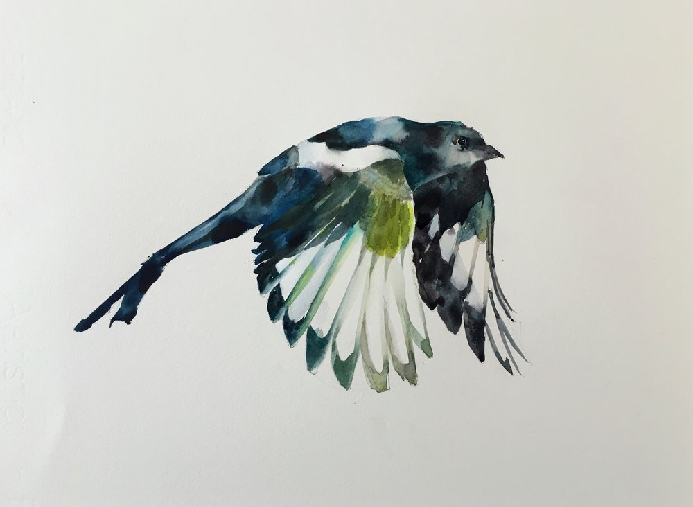 "Magpie.  Michele Clamp. Watercolor. 11""x14"""