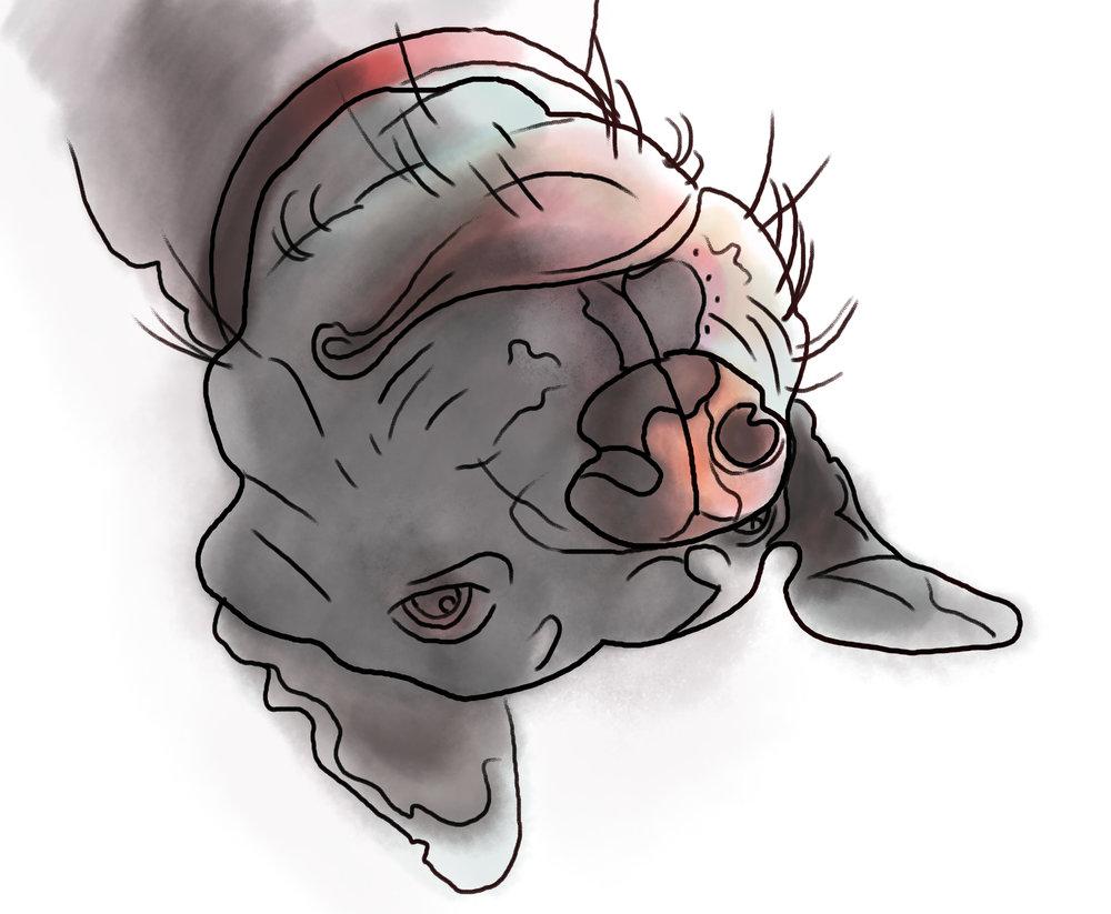 Athena upsidedown.jpg