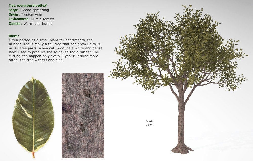 TR10-rubber-tree-01.jpg