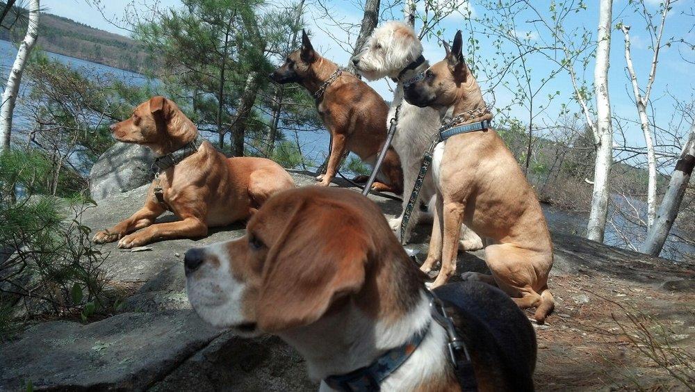 dog walking Westboro, Dog training Westboro, Dog walking Worcester, Dog training Worcester, Adventure Trips Westboro, Adventure Trips Worcester