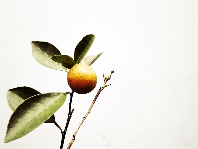 kumquat 3.jpg
