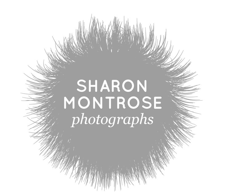 Sharon Montrose | Animal Photography | Commercial Dog Photographer | Pet Photographer
