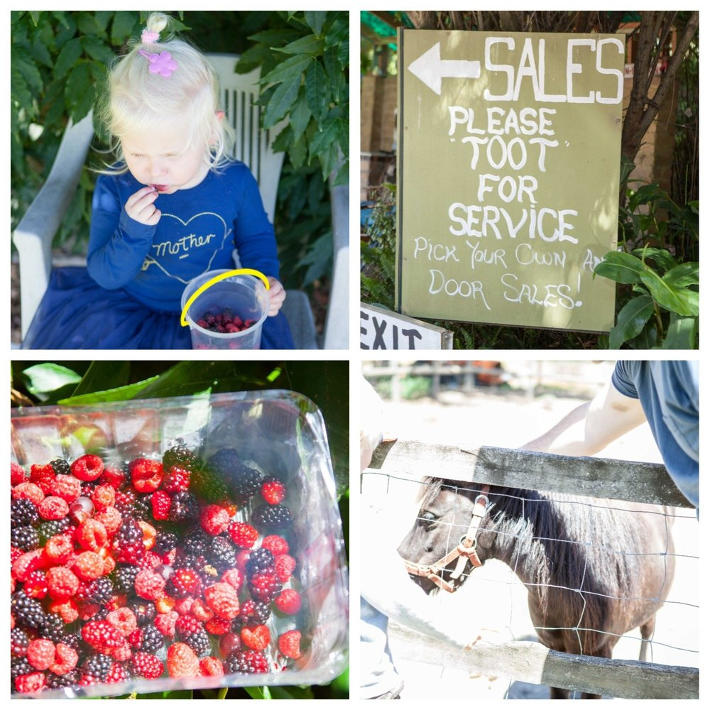 mamma knows south - the bramble farm, langwarrin