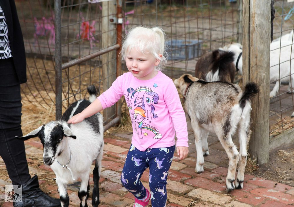 mamma knows south - rain hayne and shine animal farm, balnarring