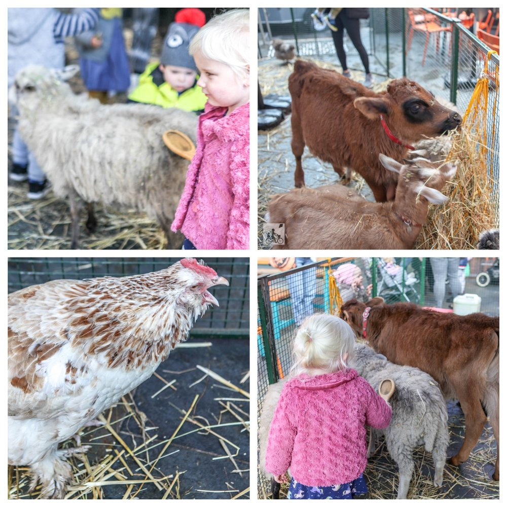 petting zoo @prahran market, prahran - mamma knows south