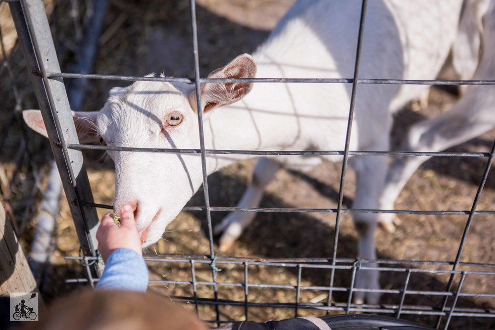Myuna Farm 2019 - Mamma Knows East (21 of 44).jpg